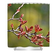 Spring Leaves Greeting Card Blank Shower Curtain