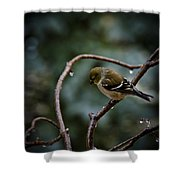 Spring Melt Waters Shower Curtain