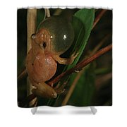 Spring Peeper Shower Curtain by Bruce J Robinson