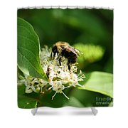 Spring Pollination Shower Curtain