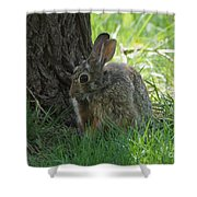 Spring Rabbit Shower Curtain