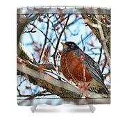 Spring Robin Shower Curtain