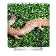 Spring Salamander Shower Curtain