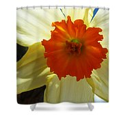 Spring Shines Brightly Shower Curtain