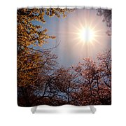 Spring Sunlight Over Cherry Blossoms  Shower Curtain by Vivienne Gucwa