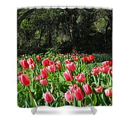 Spring Tulips 1 Vertical Shower Curtain