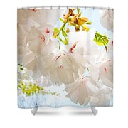 Spring White Pink Tree Flower Blossoms Shower Curtain