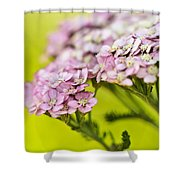 Spring's Delight Shower Curtain