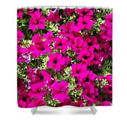 Springtime Flowers Shower Curtain