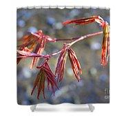 Springtime Japanese Maple Leaves Shower Curtain