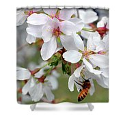 Springtime Weeping Cherry Tree Shower Curtain