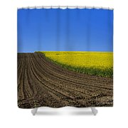 Sprouting Field Of Sunflowers And Field Of Rape. Auvergne. France. Europe Shower Curtain
