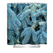 Spruce Conifer Nature Art Prints Trees Shower Curtain