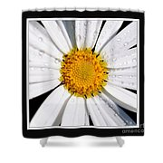 Square Daisy - Close Up 2 Shower Curtain
