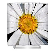 Square Daisy - Close Up Shower Curtain