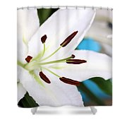 Square Lily On Blue Shower Curtain