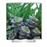 Squarely Purple Succulent Crassula Baby Necklace Shower Curtain