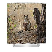 Squirrel And Cone Shower Curtain