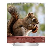 Squirrel And His Walnut Shower Curtain