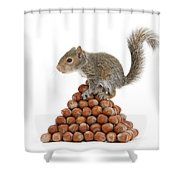 Squirrel And Nut Pyramid Shower Curtain by Mark Taylor