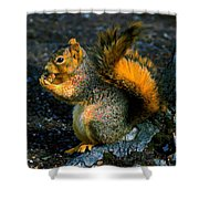 Squirrel At Riverfront Park Shower Curtain