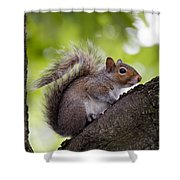 Squirrel Before Green Leaves Shower Curtain