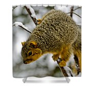 Squirrel Dive Bomber Shower Curtain