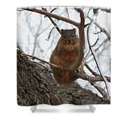 Squirrel Eating In The Frost Shower Curtain