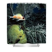 Squirrel Fish Shower Curtain