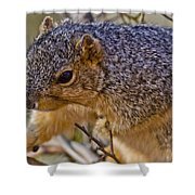 Squirrel Having A Heart Attack Shower Curtain