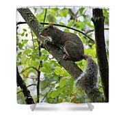 Squirrel I Shower Curtain