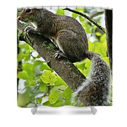 Squirrel IIi Shower Curtain
