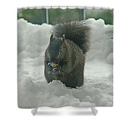 Squirrel In The Snow Shower Curtain
