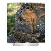 Squirrel Looking For A Hand Out Shower Curtain