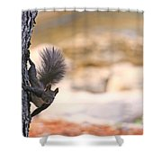 Squirrel Sitting On The Tree  Shower Curtain