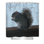 Squirrel Snack Shower Curtain