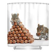 Squirrels And Nut Pyramid Shower Curtain