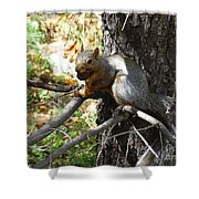 Squirrling Away Shower Curtain