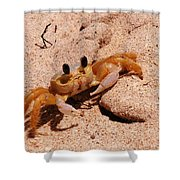 St. Lucia Crab On Beach Shower Curtain