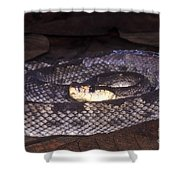 St. Lucia Pit Viper Shower Curtain