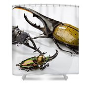 Stag Beetles Shower Curtain