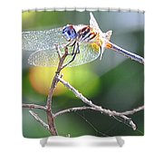 Stained Glass Inspiration Feminine Shower Curtain