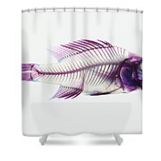 Stained Rockbass Fish Shower Curtain