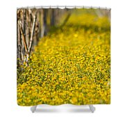 Stalks And Sunshine Shower Curtain