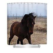 Stallion Shower Curtain