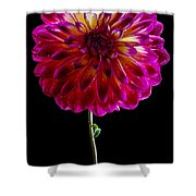Stand Up Dahlia Shower Curtain