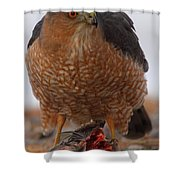 Standing Guard - Cooper's Hawk Shower Curtain