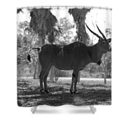 Standing Tall In Black And White Shower Curtain