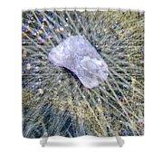 Star Hip 53550  Shower Curtain by Augusta Stylianou