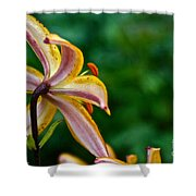 Star Lily Shower Curtain